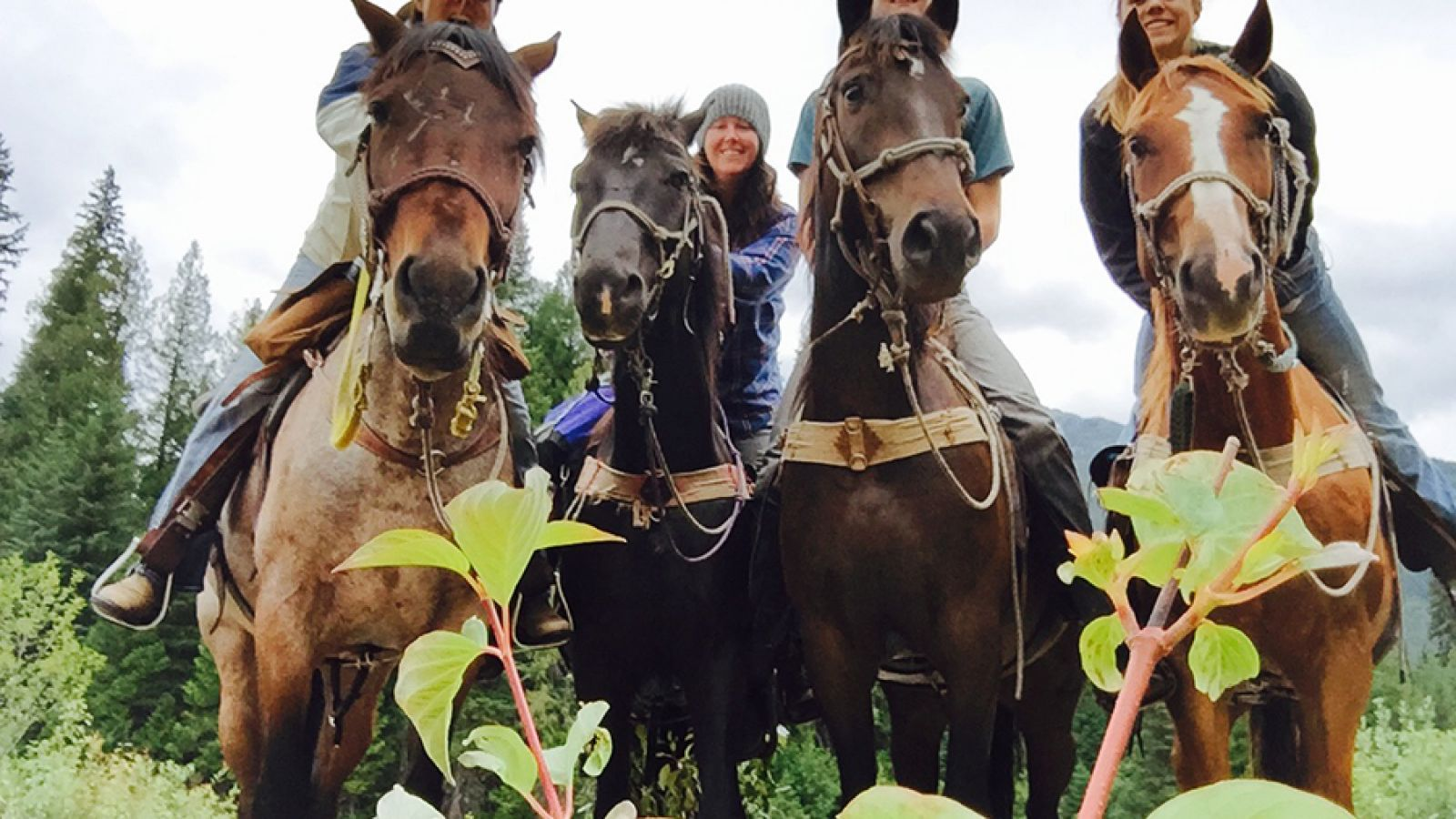 Hello horses!