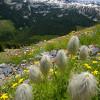 Magnificent wildflower displays.