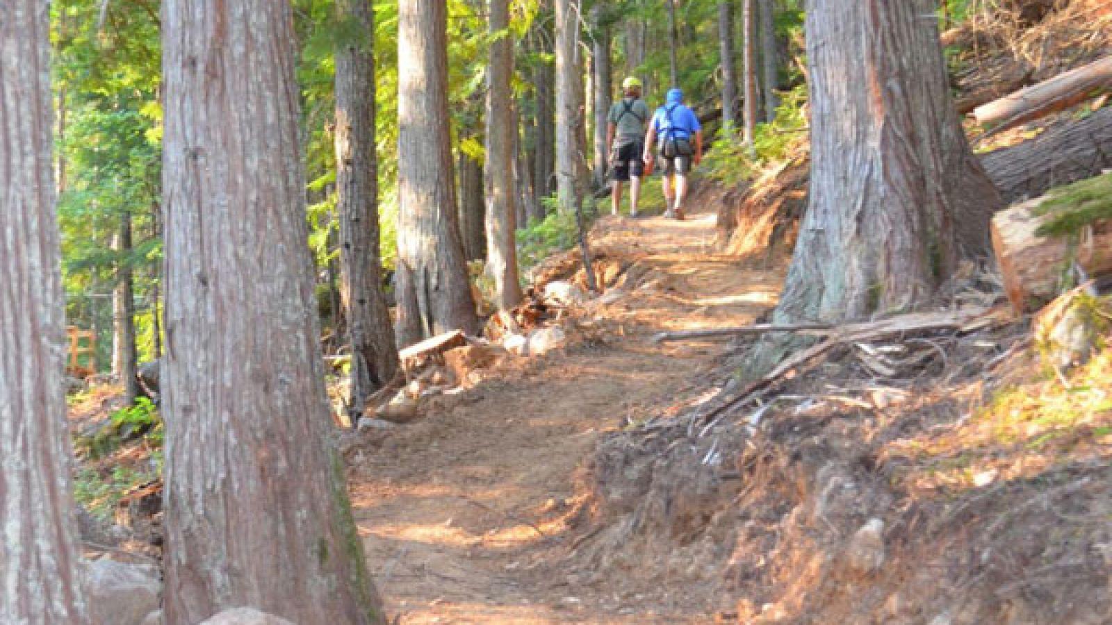 A short hike between ziplines.