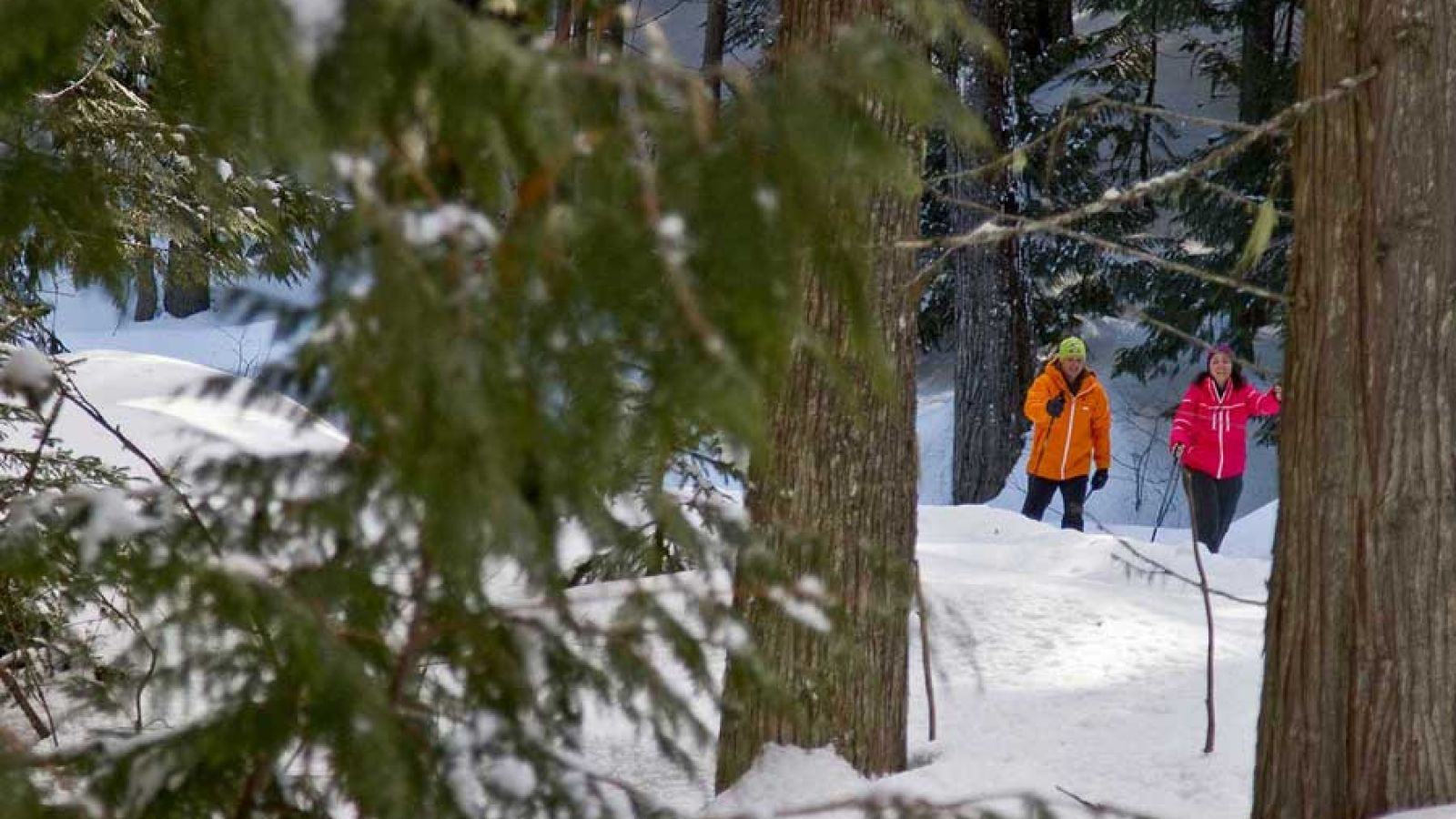 Wonderful cross-country skiing trails at Island Lake Lodge.