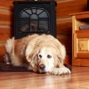 Pet Friendly Lodging in the Kootenay Rockies