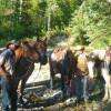 Bull River Adventures