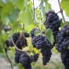Red Bird Estate Winery