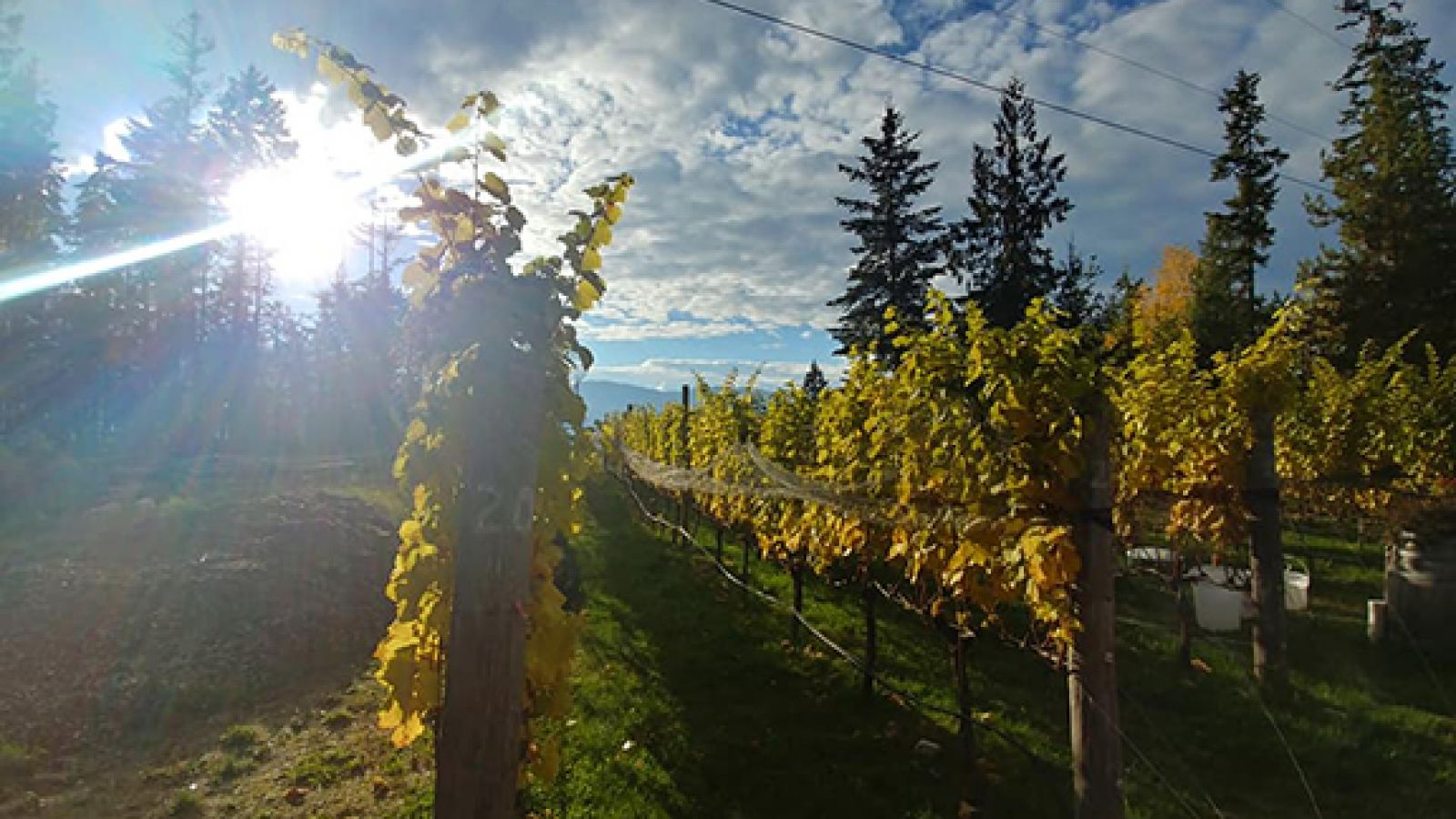 The Kootenay Rockies newest winery.