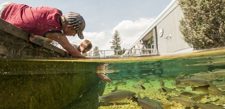 Kootenay Trout Hatchery