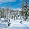 Black Jack XC Ski Trails