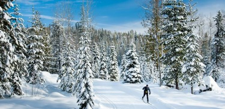 Black Jack XC Ski Trails