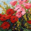 Kimberley poppies.