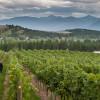 Creston Cru: Get a Taste of these Vineyards