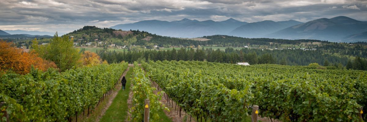 Creston Cru: Get a Taste of these Vineyards