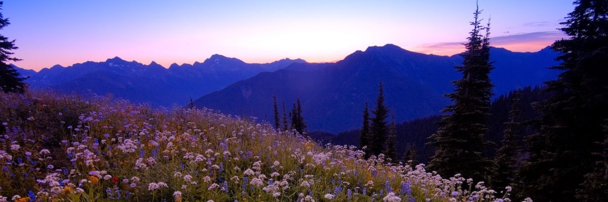 Easy Kootenay Hikes: 360 Degree Vista Views