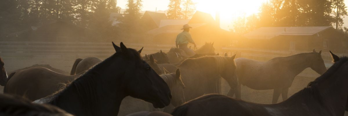 The Power of Horses: Trail Riding in the Kootenays