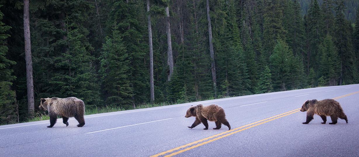 Kootenay National Park - Kootenay Rockies Tourism